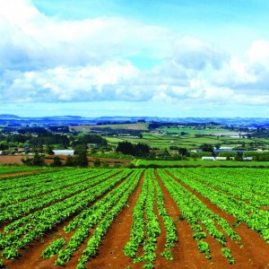 Positive Agro Outlook  Attracts Int'l Players