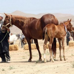 Horse Industry Affected by Irregular Imports