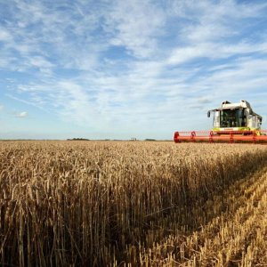 Wheat Policy Looks Set to Change