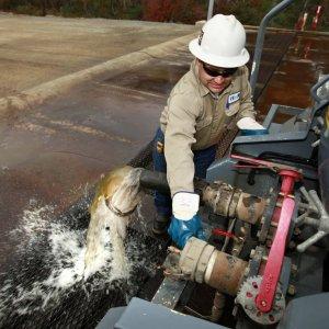 California Farmers Using Fracking Water