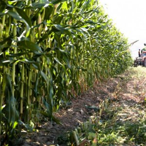 Loans to Boost Rural Co-ops