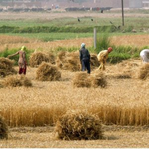 Agro Bank Mobilizes to Help Development