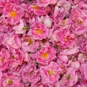 Iran's Share of Damask Rose Trade Meager