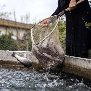 Fish Farming in the Heart of Desert