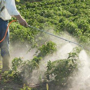 80% of Pesticide Demand Met at Home