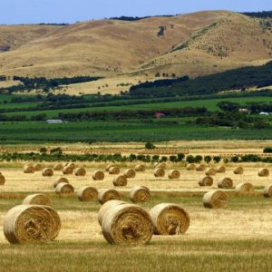 Australia Offers Big Opportunity  for Iran's Agro Sector