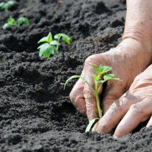 Iran Fertilizer Market Forecast to Grow