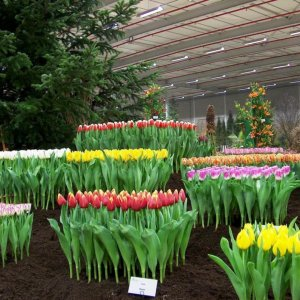 Flower Cultivation, an Enchanting Business Opportunity
