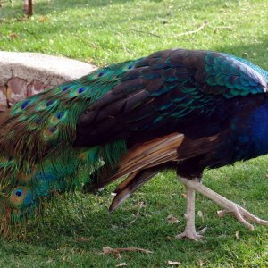 Chaharbagh Bird Garden Biggest in Middle East
