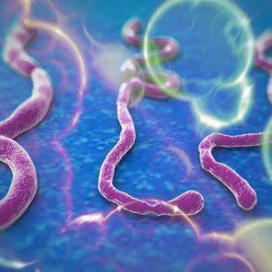 WHO to Set up Contingency Fund After Ebola