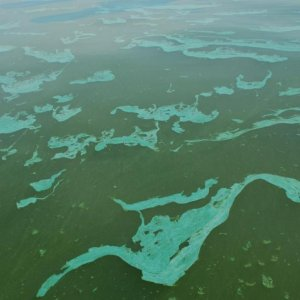 Harmful Algae Growth in Sea Waters