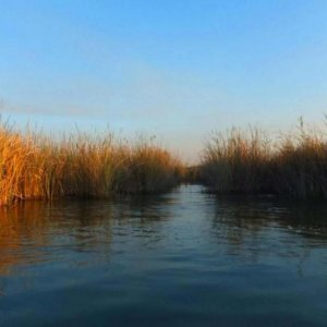 Wastewater Pollutes Karoon River