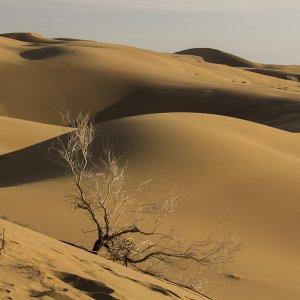 Lut Desert for World Heritage List