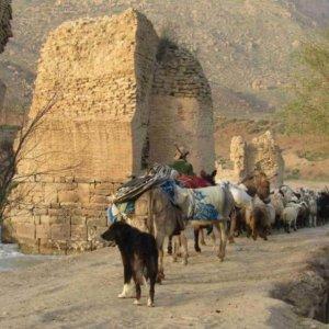 Kermanshah Nomads Move to Warmer Climes