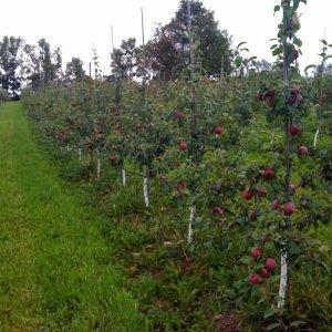 Organic Farming in 41,000 Hectares