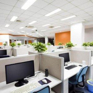 Plants Increase Staff Productivity