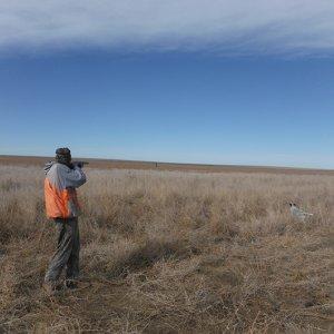 Poachers Continue to Threaten Environment