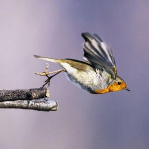 Telephone Waves Can Disrupt Birds' Flight Path