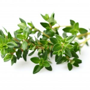 Treating Colds With Thyme