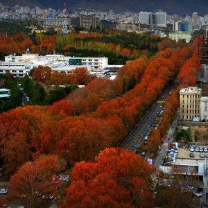 Tehran to Host Autumn Flower Festival