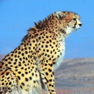 Wildlife Shrinking