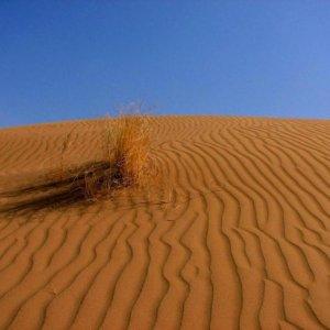 Desert's Cruel Face