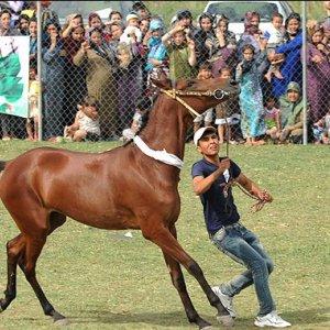 Equestrian Eco-Camp in Sanandaj