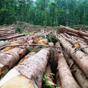 India Facing Drought Due to Deforestation