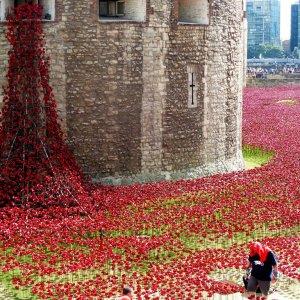 5m Visit London Poppy Display