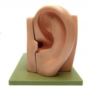 Audiology Congress
