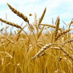 $11m Damage to Crops  in Zanjan
