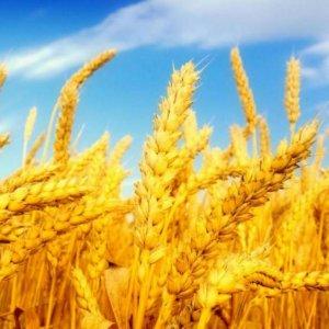 Crisis Management to Consider Farm Insurance