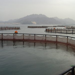 Iran Can Produce 900,000 Tons of Caged Fish