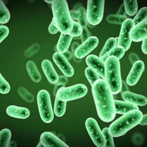 Melioidosis Can Live Decades in Distilled Water