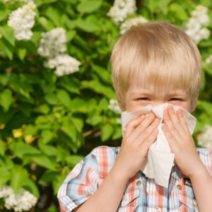 Hay Fever Leads to Asthma