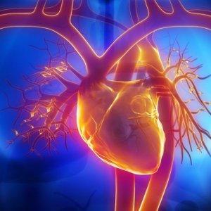 Nanotech Heals Damaged  Heart Tissue