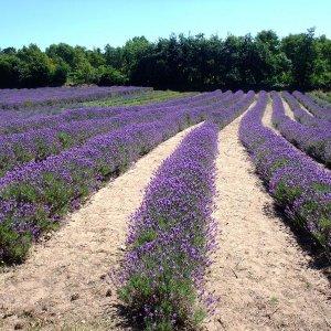 Modernizing Farming of Herbal Plants