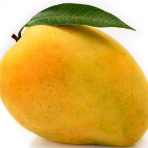 Mango Import Regulations