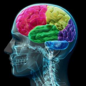 Ranking in Neuroscience
