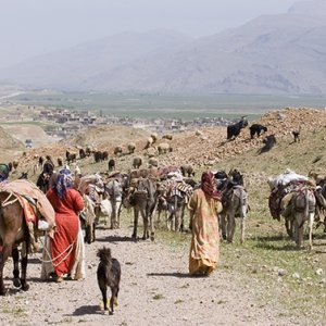Most Nomads Covered by Insurance