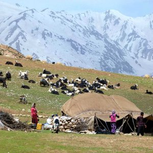 Insurance, Pensions for Nomads, Farmers