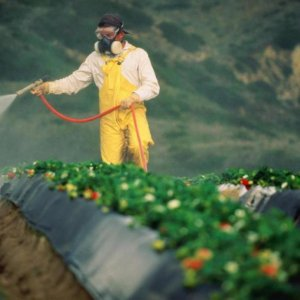 Managing Pesticide Use Crucial for Health