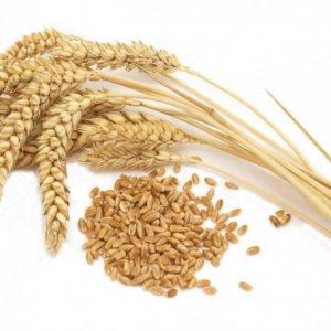 Iran Top Consumer of Rice, Wheat