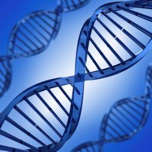 Scientist or Artist? Genes May Decide