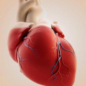 Fetal Heart Surgery