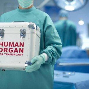 Shiraz: Organ Transplant Hub