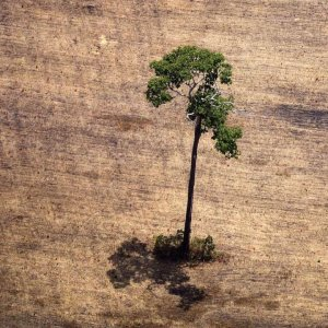 Amazon Deforestation Could Reduce Rainfall