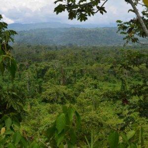 Half of Amazon Tree Species Endangered