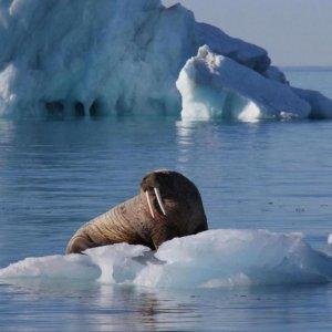 Arctic Temperature at 115-Year High