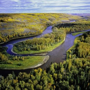 Climate Change Threatens Boreal Forests